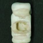 鳴神貝塚 猿の橈骨製耳飾り