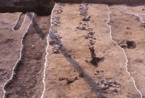 山口御殿跡 土塀の基礎(2条の石列)