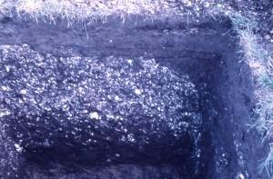禰宜貝塚 貝層の様子