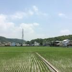 井辺前山古墳群の写真