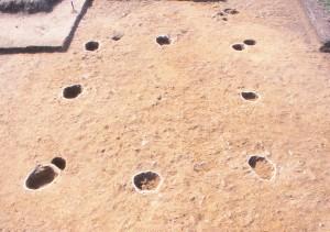 高井遺跡 掘立柱建物