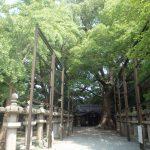伊久比売神社の樟樹の写真